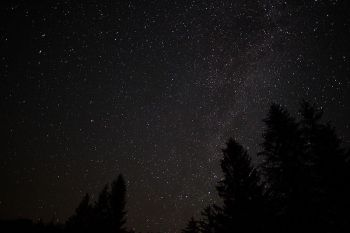 Spruce-forest-night-sky-stars_-_West_Virginia_-_ForestWander2